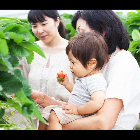 いちご農園をお探しの方は湯布院から車でお越しいただける【日隈いちご園】の食べ放題サムネイル